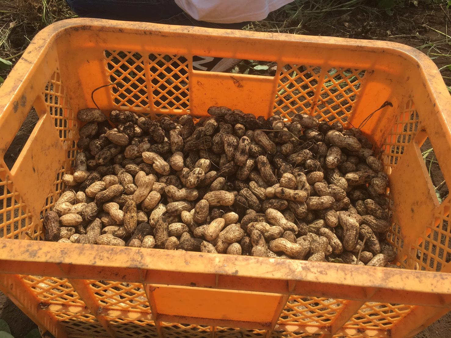 村のやさい様のご協力で農業体験を実施しました!